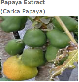 bild_papaya.png